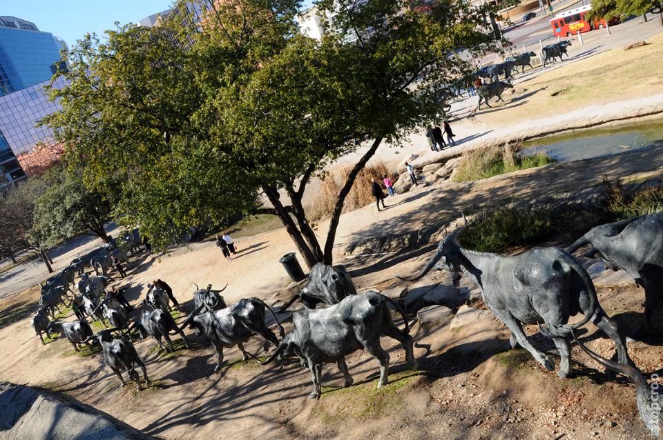 """Скульптура из бронзы """"Быки идут на водопой"""" на Pioneer Plaza в Далласе"""