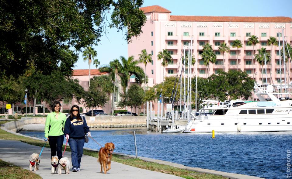 Прогулки местных жителей Сент-Петерсбурга, Флорида