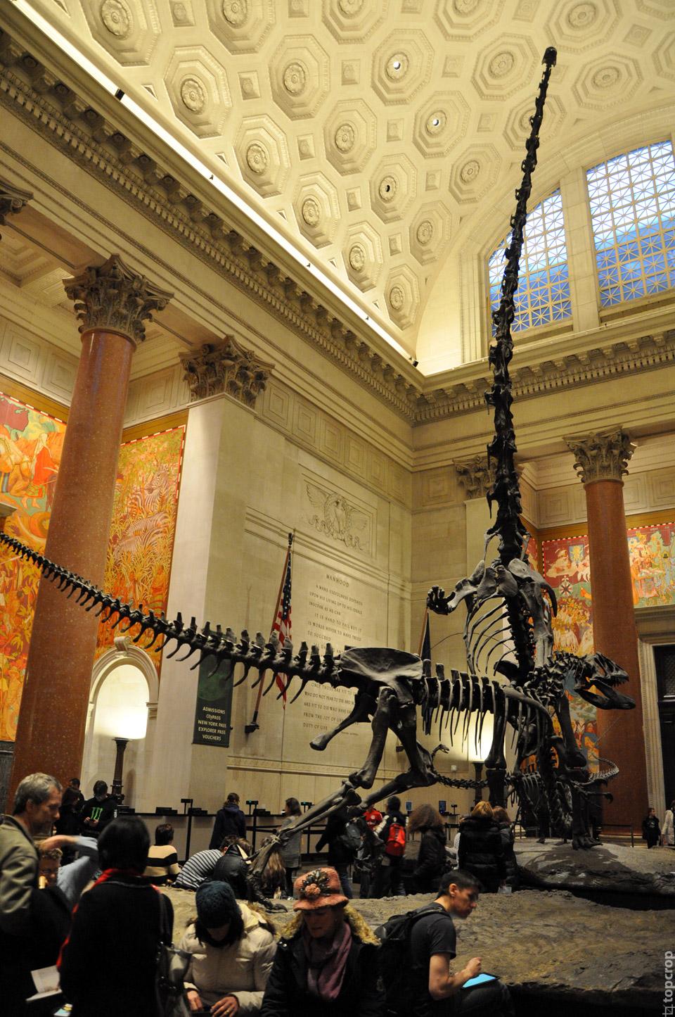 Холл музея Естественной истории