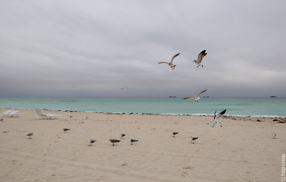 Чайки около океана