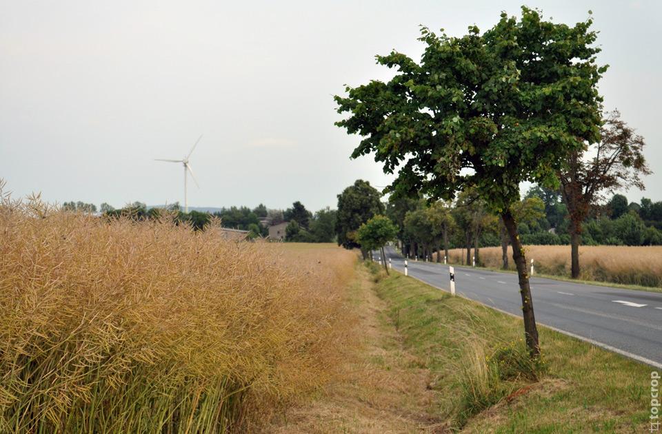 Сельская дорога в Германии