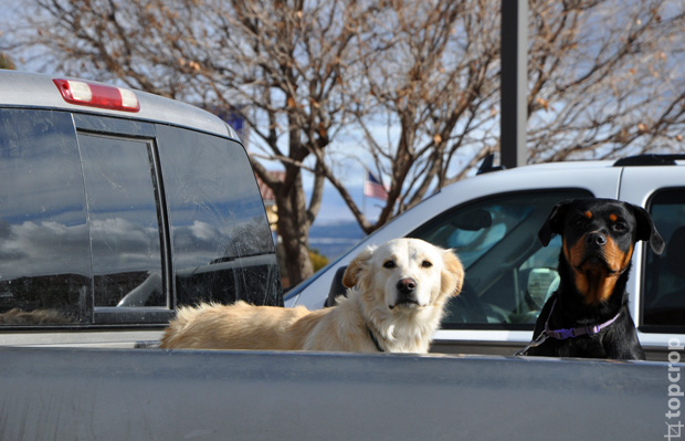 Собаки в USA
