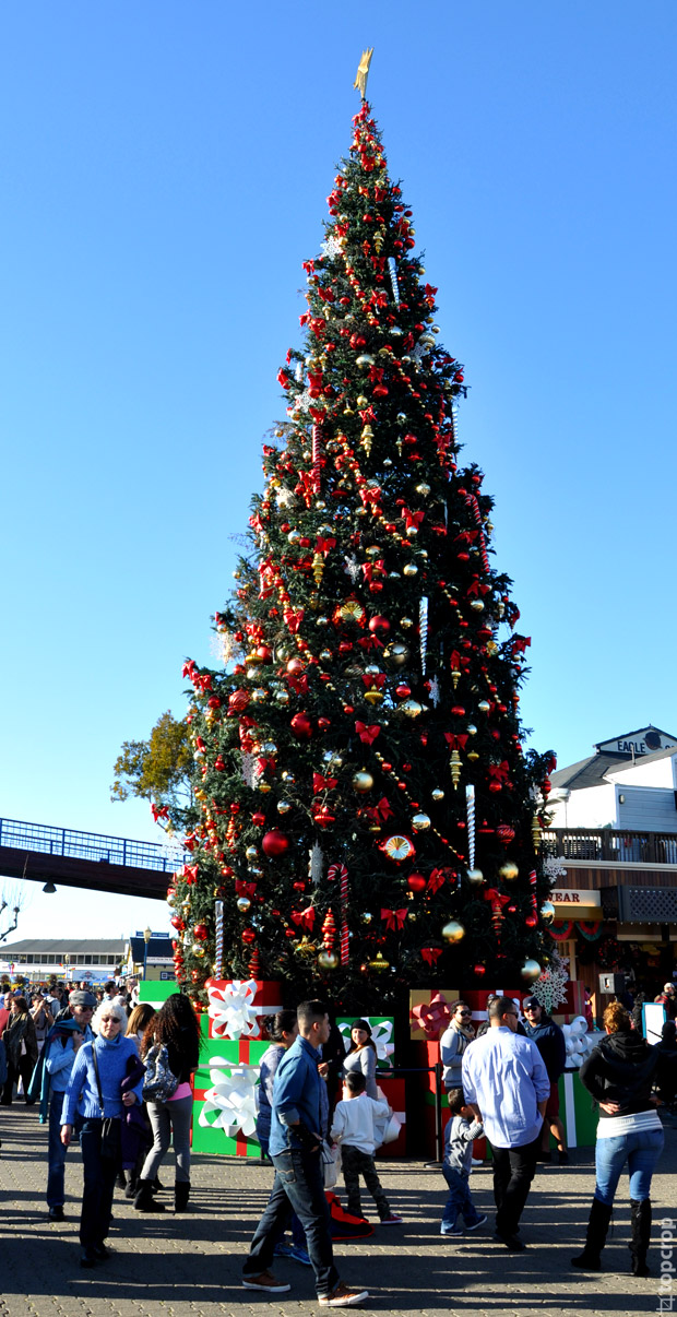 Рождественская ель в Сан-Франциско