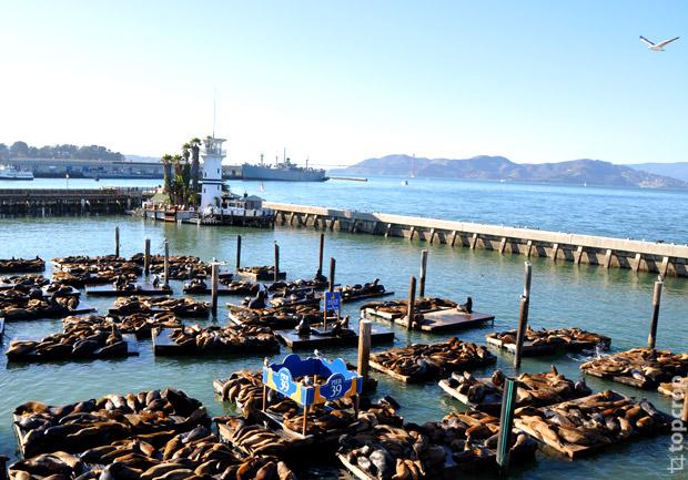 морские львы, морские котики, пирс 39, pier 39