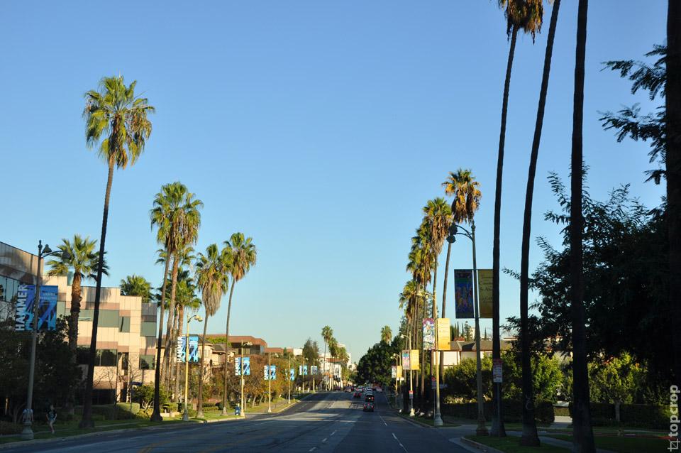 Типичная улица Лос-Анджелеса с пальмами