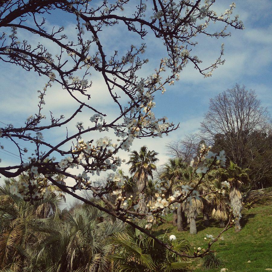 Цветущие деревья в Дендрарии Сочи