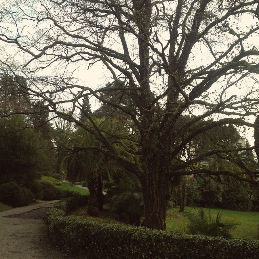 Дерево в Дендрарии