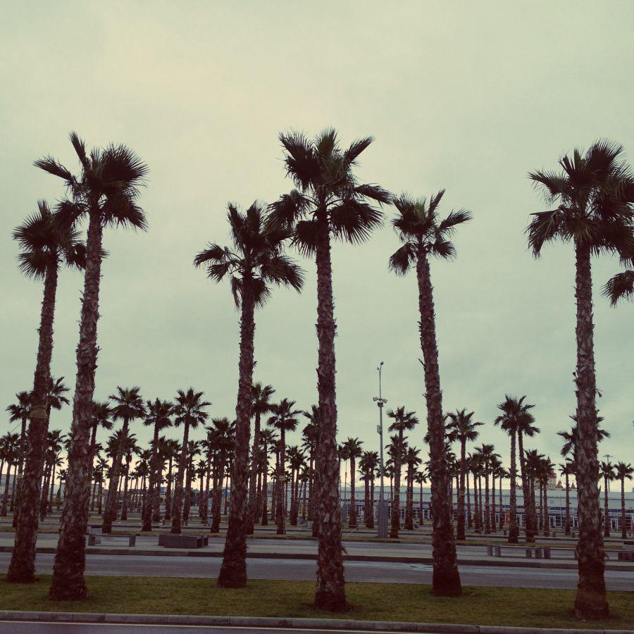 Пальмы около входа в Олимпийский парк