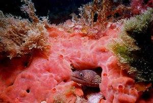 Подводный мир мальтийских вод богат рыбами красочными кораллами, которые удачно получаются при ночной съемке.