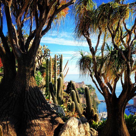 Сад экзотических растений.