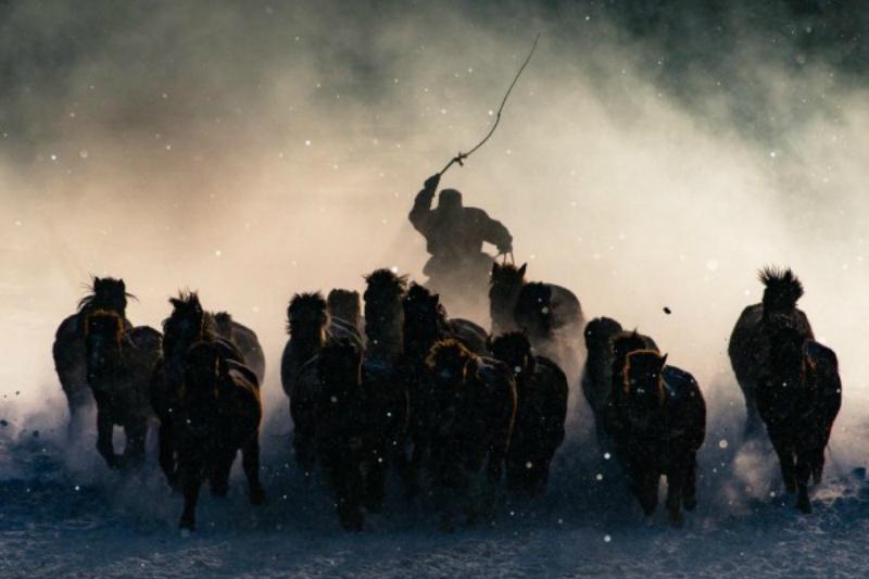 """""""Погонщик лошадей в Монголии"""" - победитель National Geographic Traveler Photo Contest 2016"""