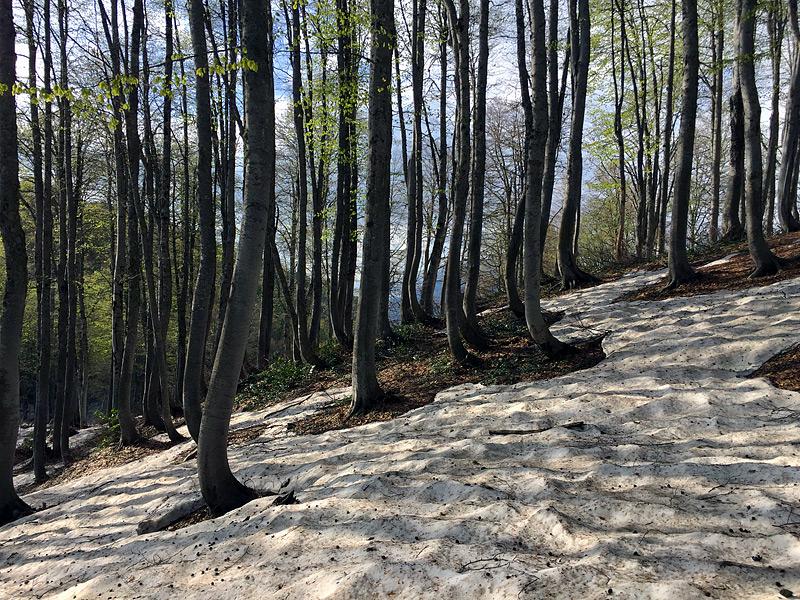 горный лес летом