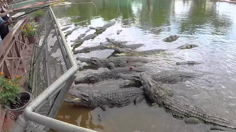 Крокодиловая ферма, Suoi Tien Park